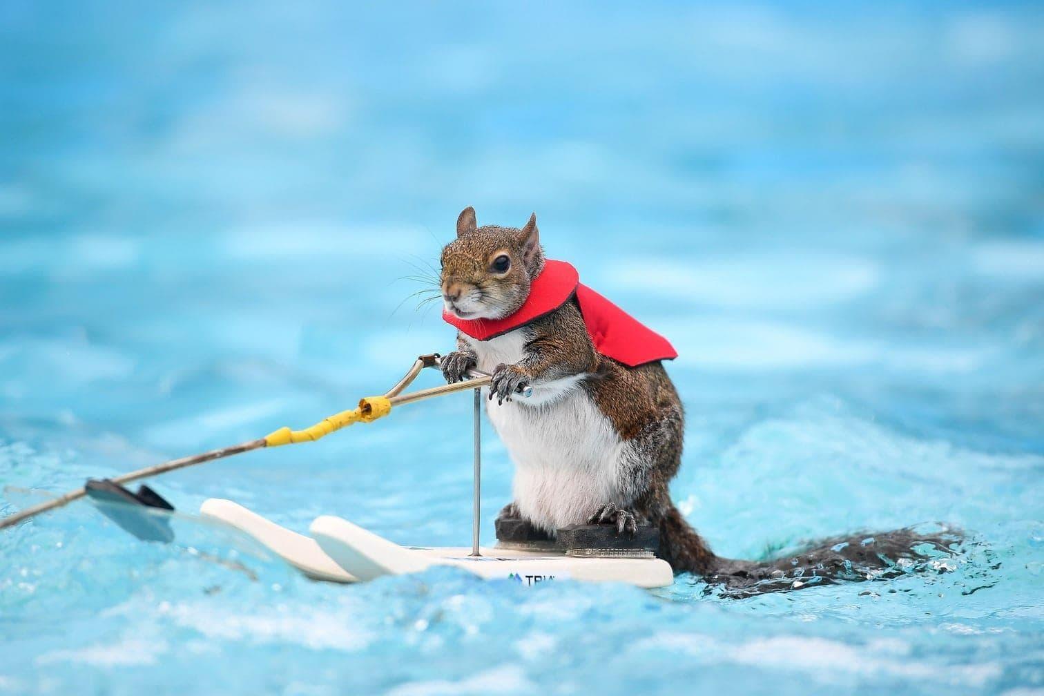 <p>Eichhörnchen auf Wasserskiern? Gibt's nicht? Gibt's doch!</p> Foto: dpa