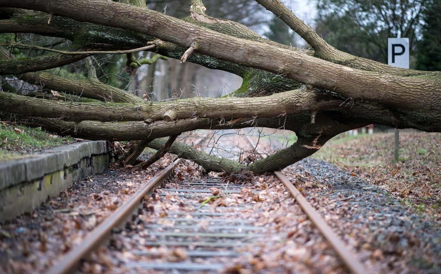 Umgestürzter Baum Gleise