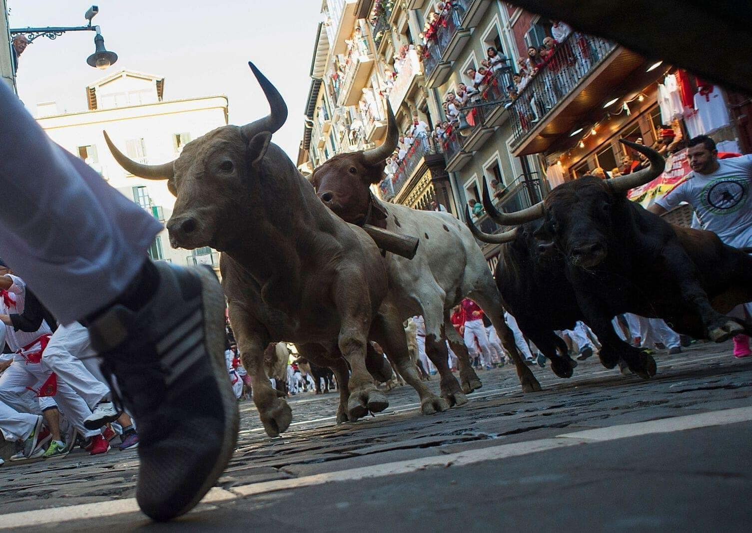 Stierhatz Pamplona 2019