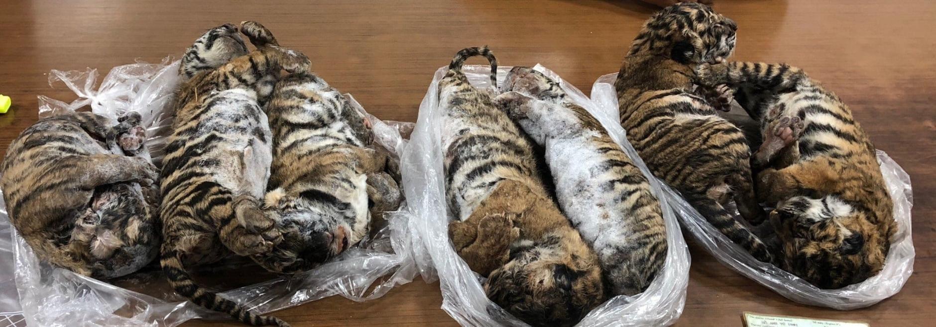 Tote Tiger Vietnam