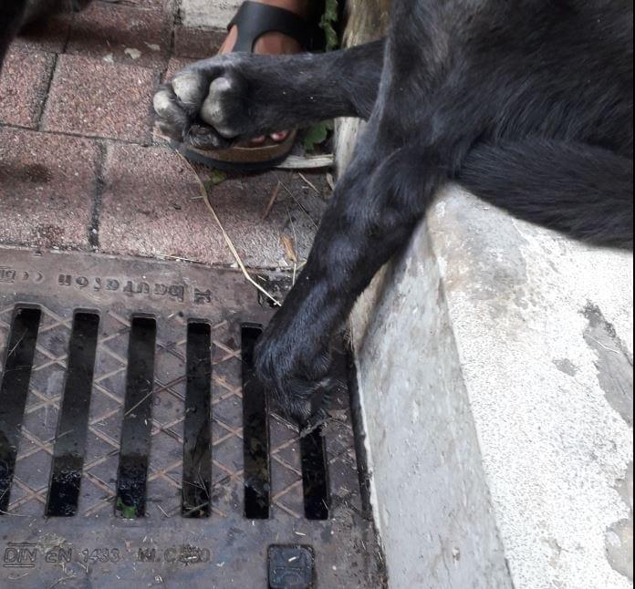 eingeklemmte Pfote Hund
