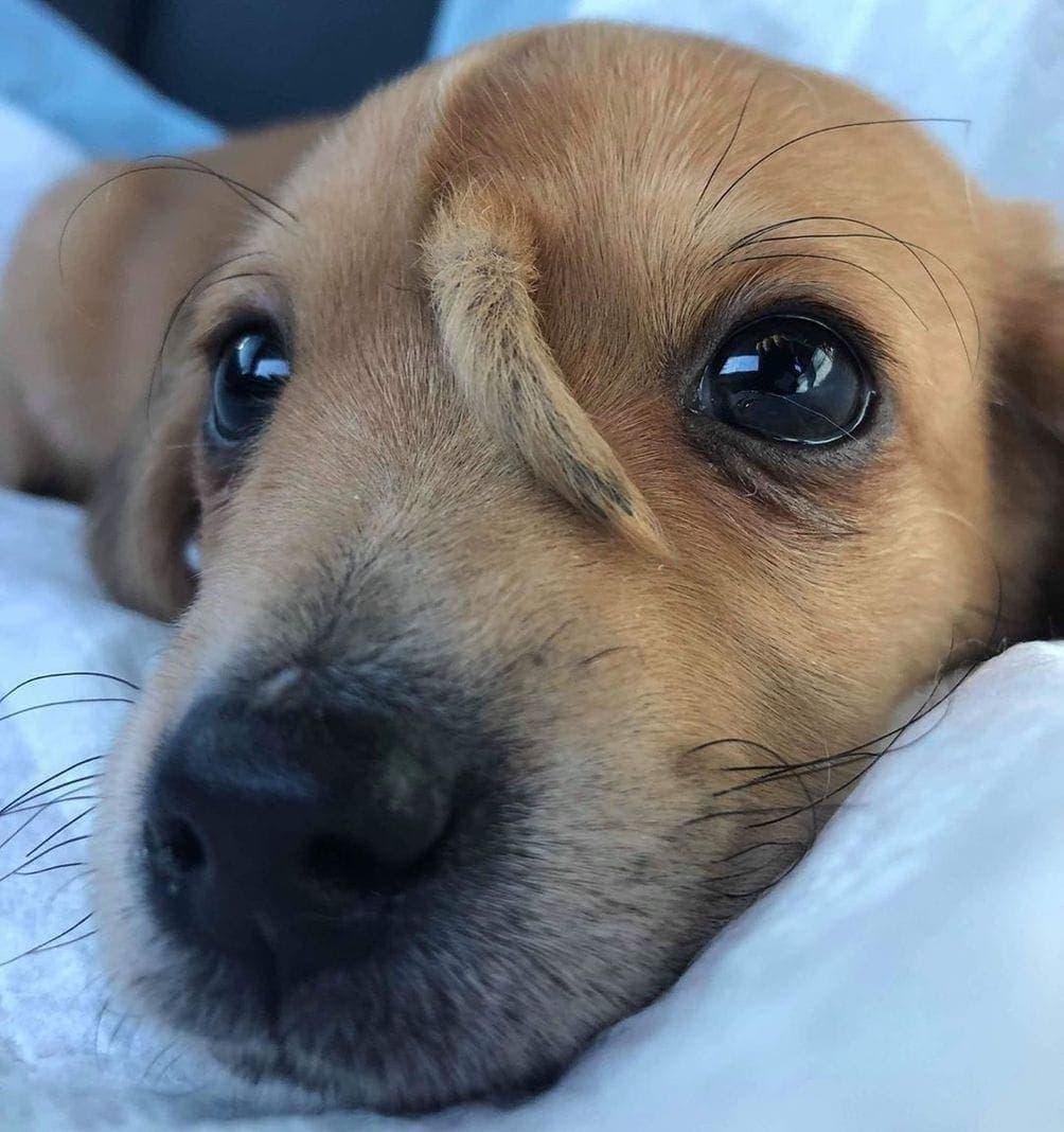 Einhorn Hund