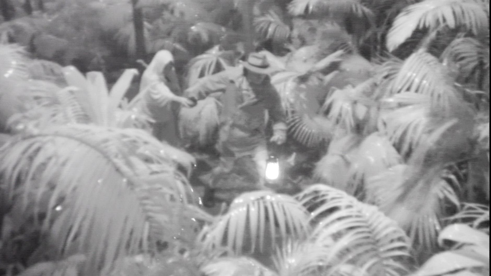 Dschungelcamp 2020 tödliche Spinne