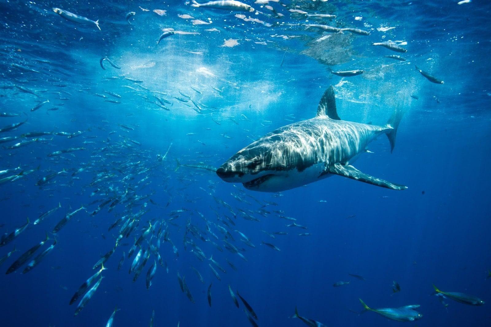 Titelbild Fische