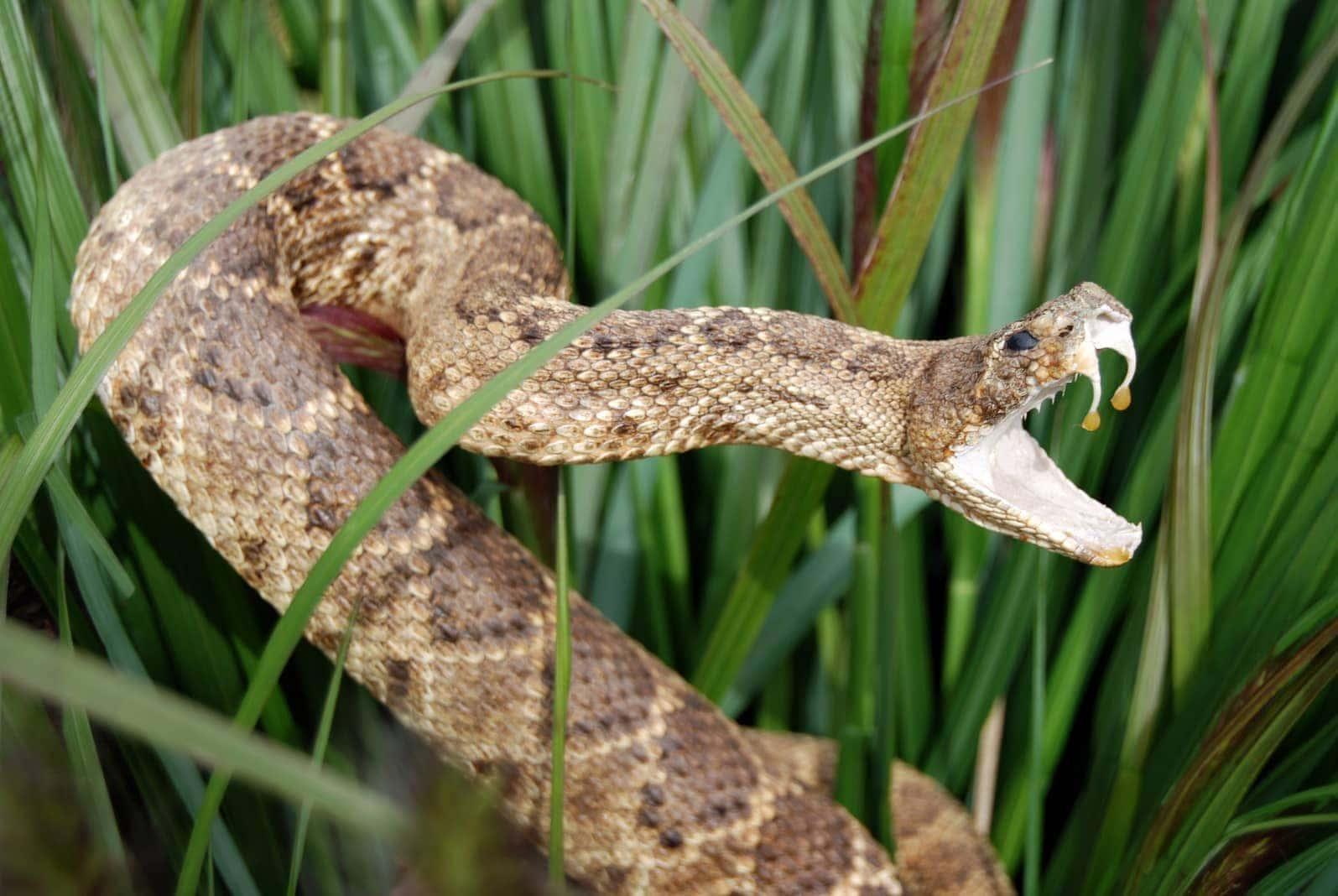 Titelfoto Schlange