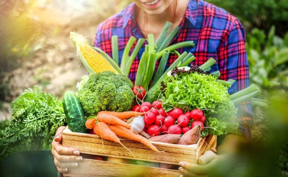 Gemüse-Kiste Bio-Essen