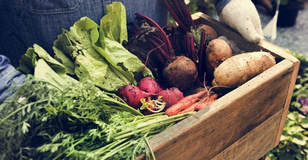 Gemüse-Kiste Bio
