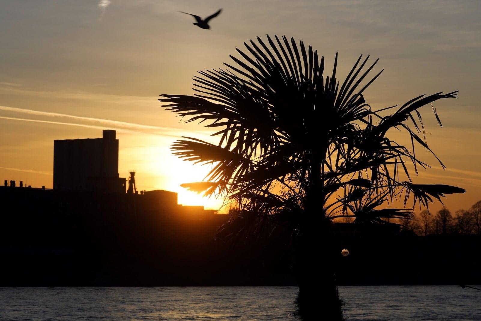 Köln: Das ist die Vorhersage für das Wetter heute und morgen