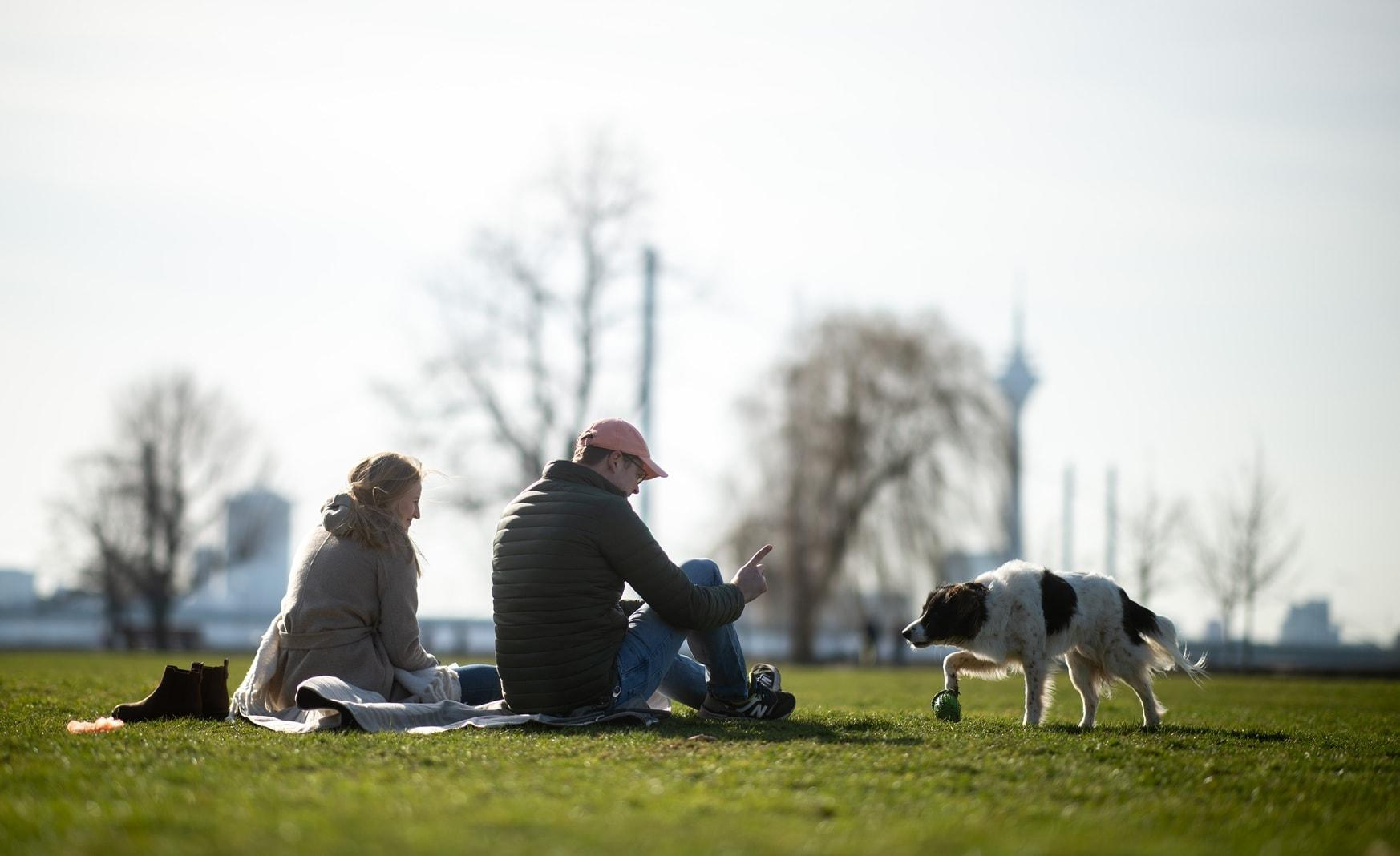Düsseldorf Rheinwiesen Hund Paar
