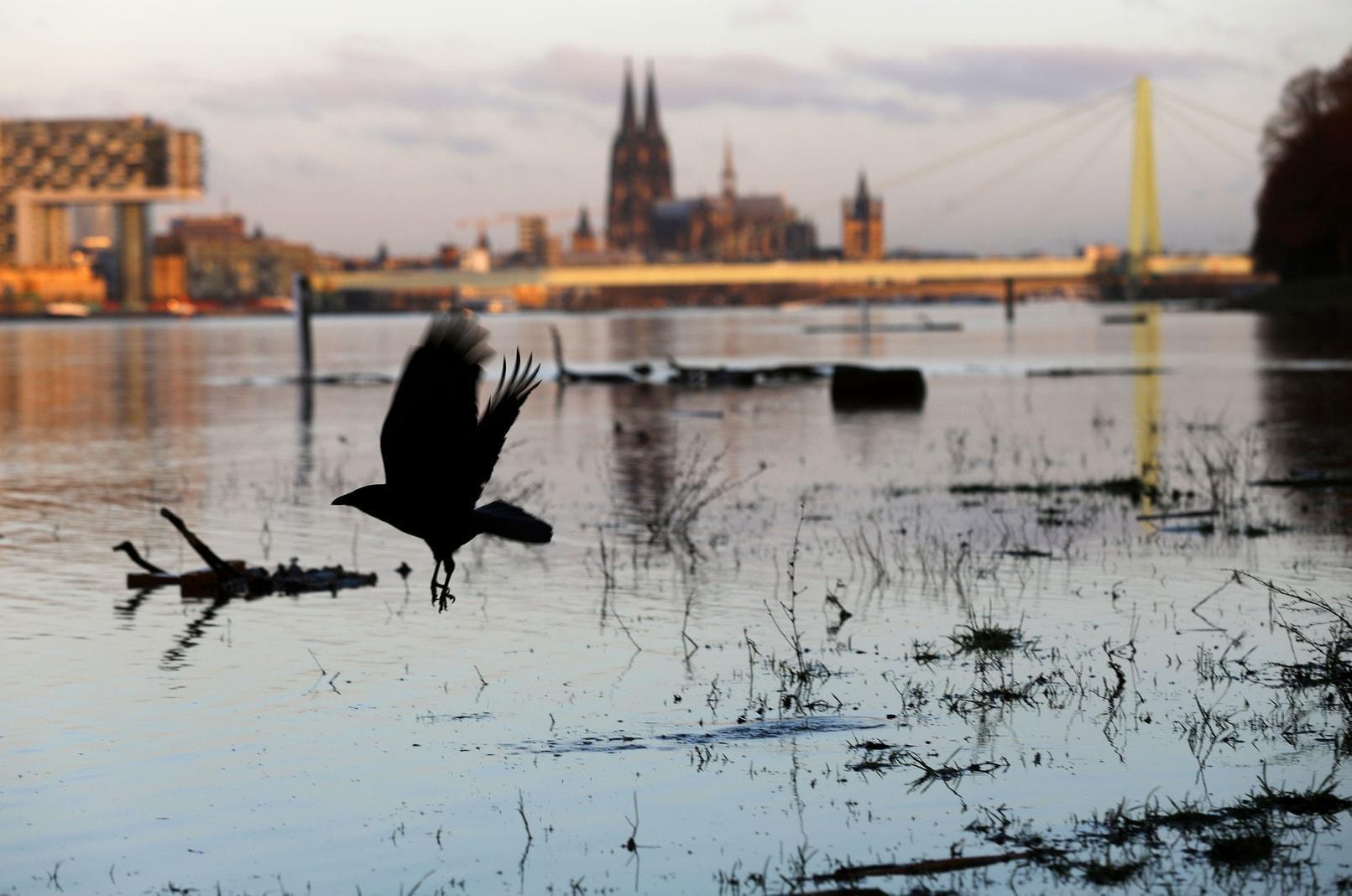 Hochwassers am Rhein bei Köln