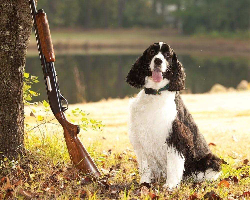 Foto: John Wollwerth/Shutterstock.com (Symbolbild)