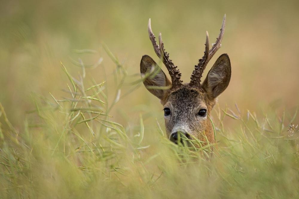 Foto: Szczepan Klejbuk/Shutterstock.com (Symbolbild)