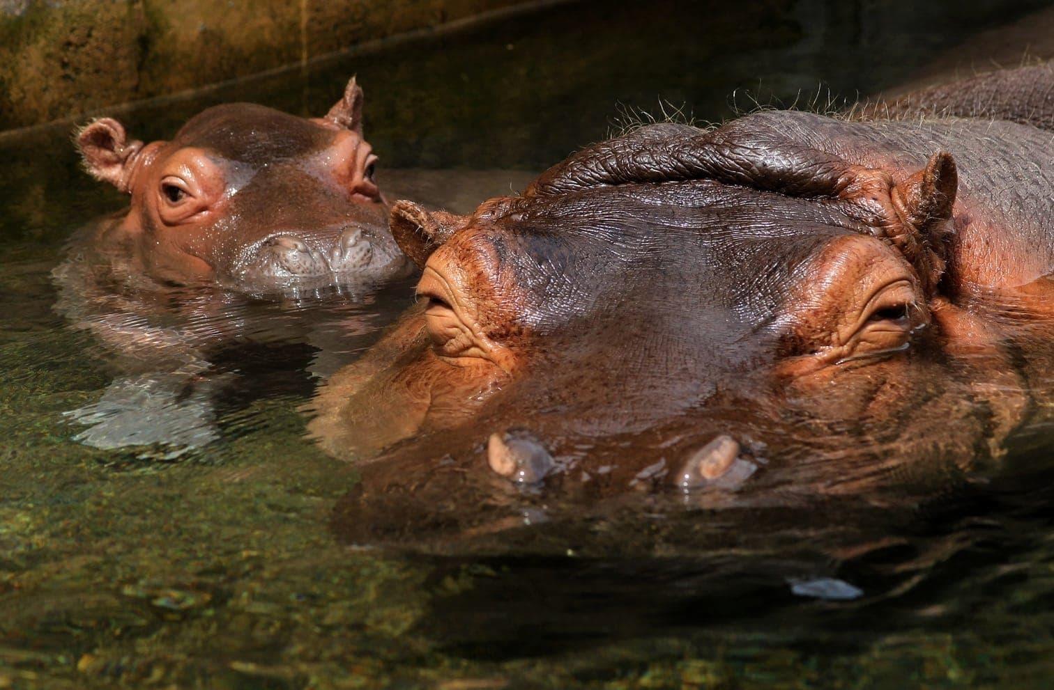 <p>Die Mutter kümmert sich rührend um den kleinen Fratz.</p> Foto: AFP