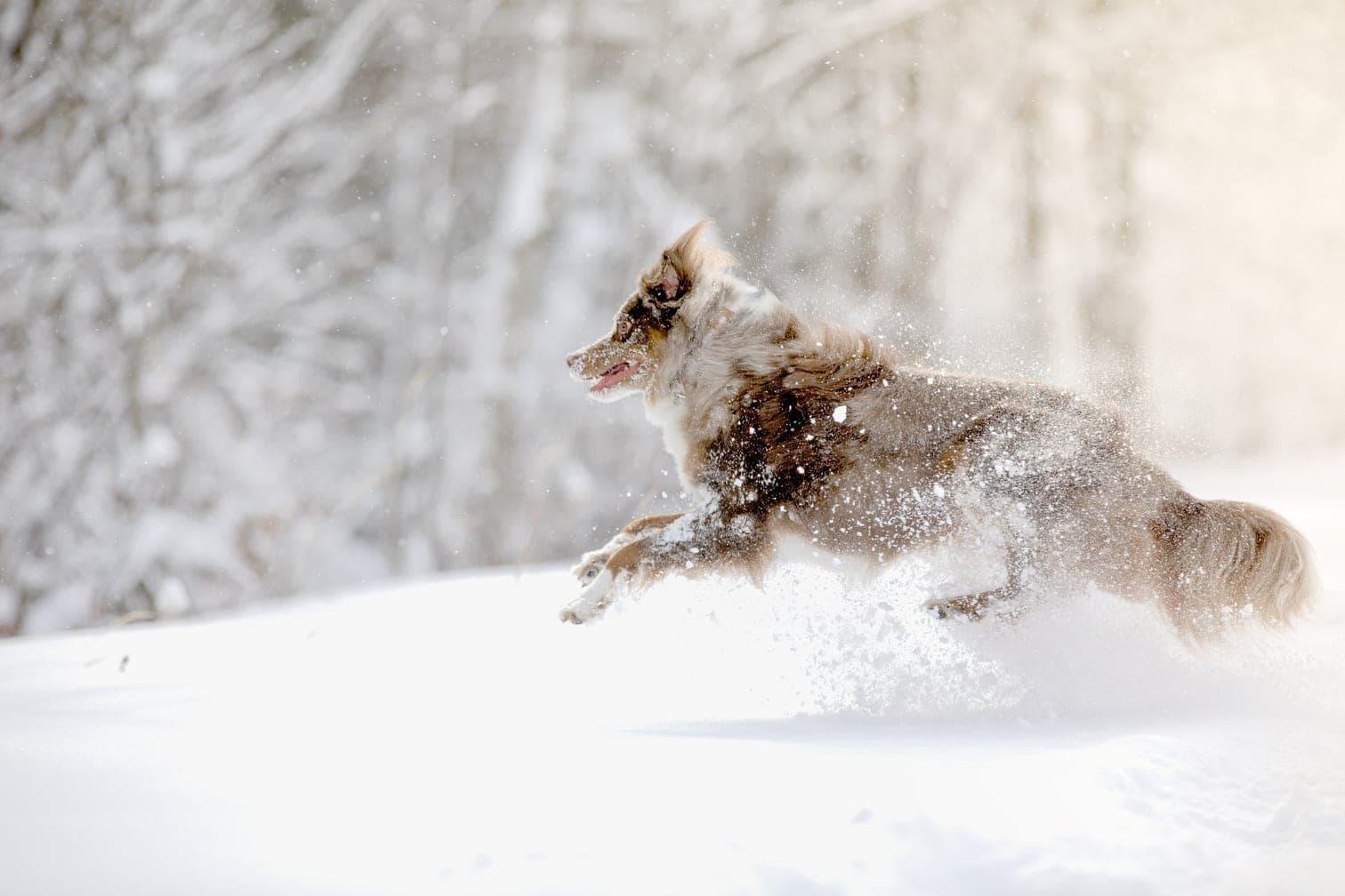 Foto: Julia Wimmerlin / shutterstock.com