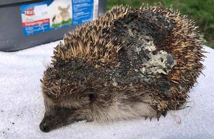 Foto: Tierschutz für Willich e.V.
