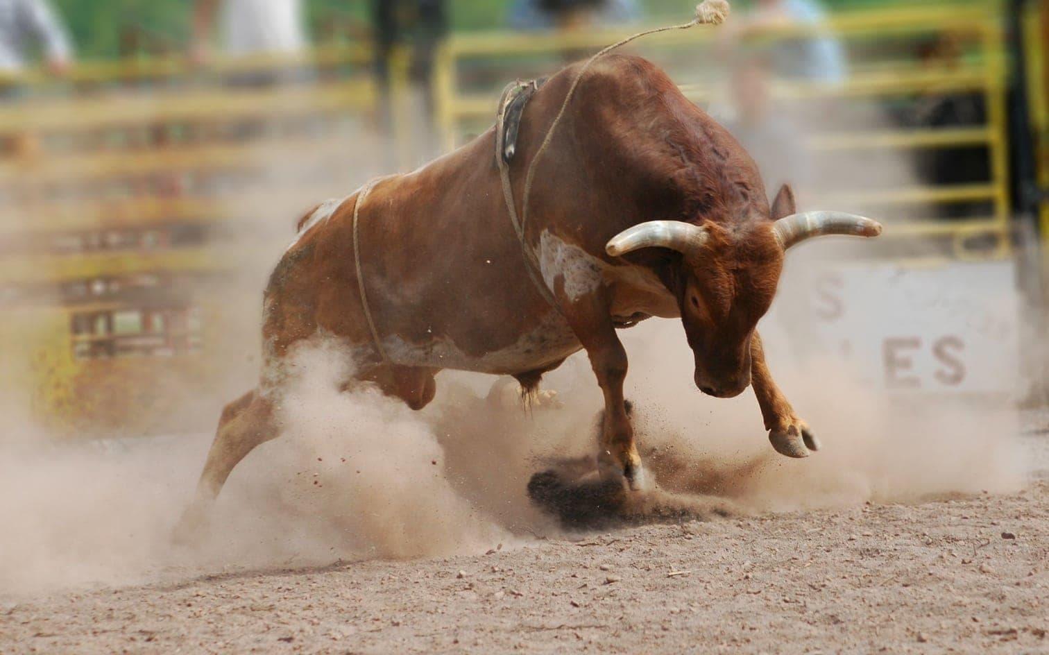 Foto: Shawn Hine / Shutterstock.com (Symbolbild)