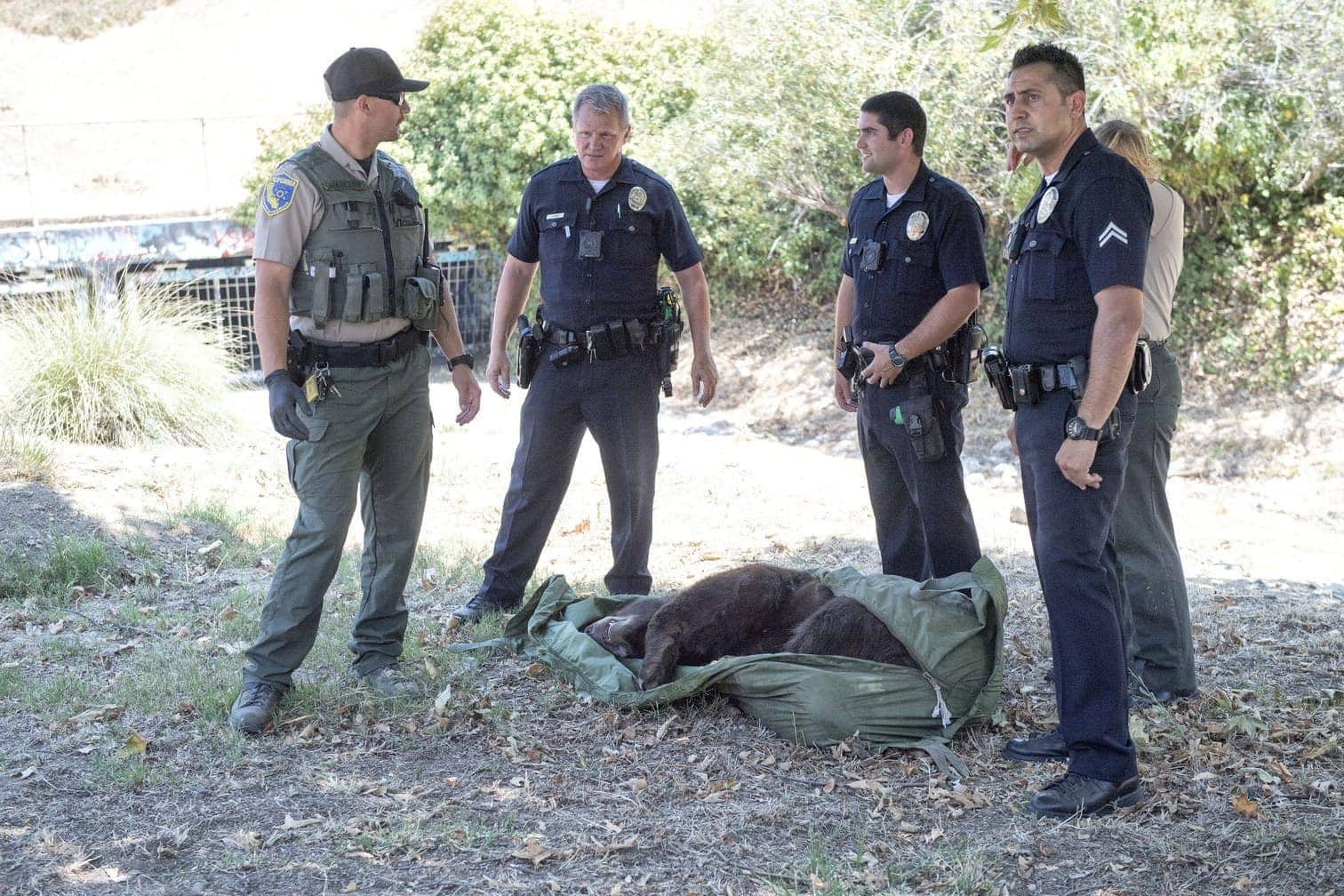 <p>Dieses von CBS2/KCAL9 zur Verfügung gestellte Fotomaterial zeigt Wildhüter