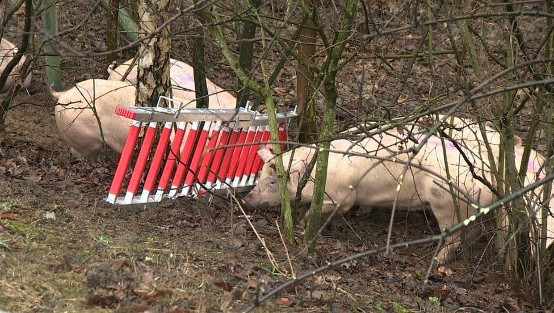 <p>Der 33-jährige Fahrer des mit rund 180 Schweinen beladenen Transporters wurde schwer verletzt.</p> Foto: dpa/Arnulf Stoffel