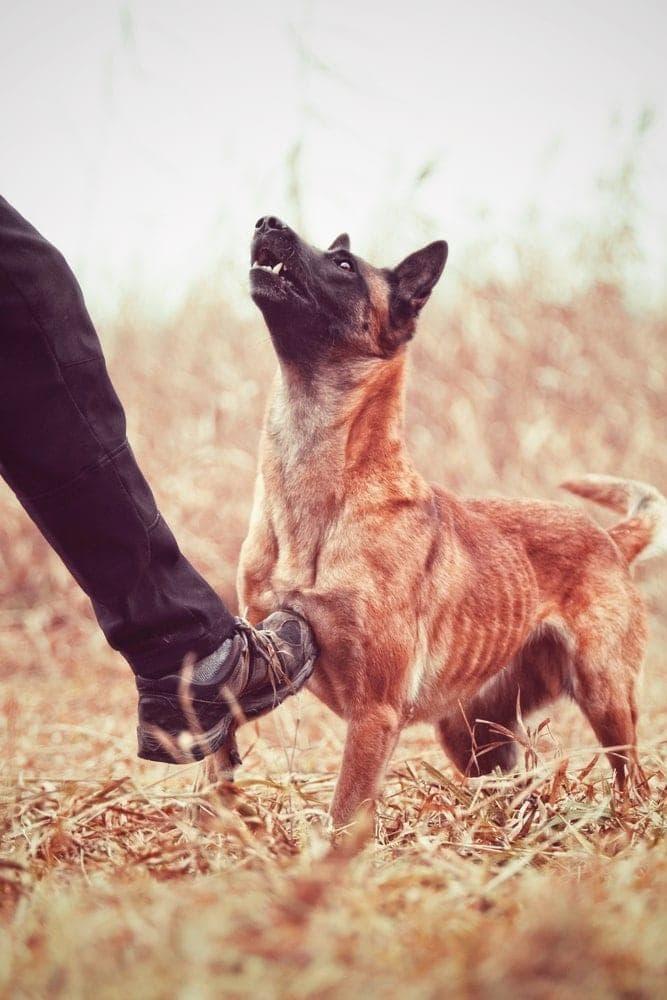Mann tritt Hund