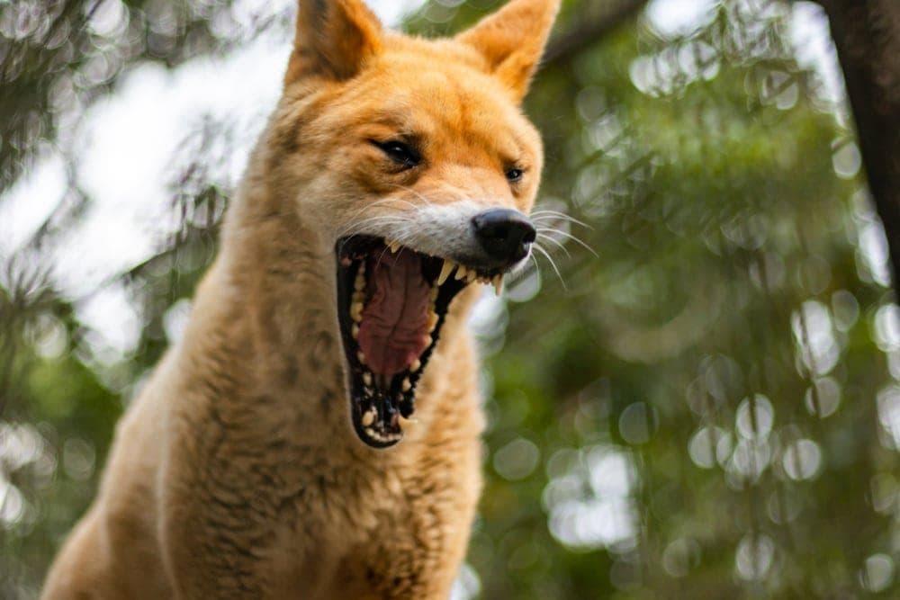 Foto: Torpy/Shutterstock.com
