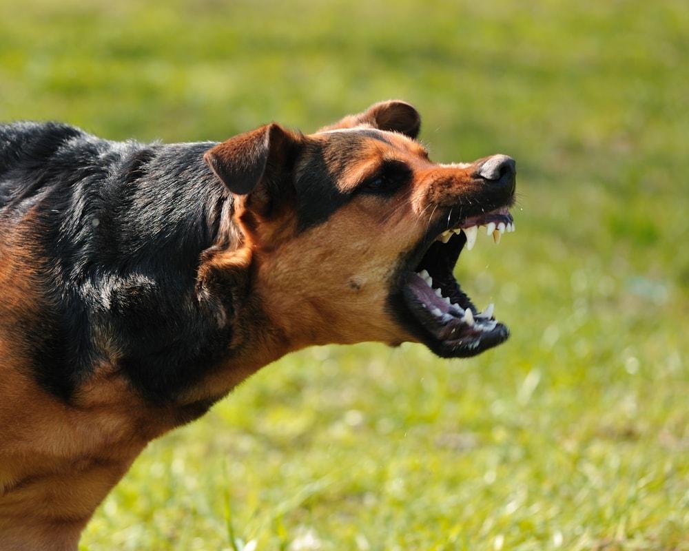 Hund bellt