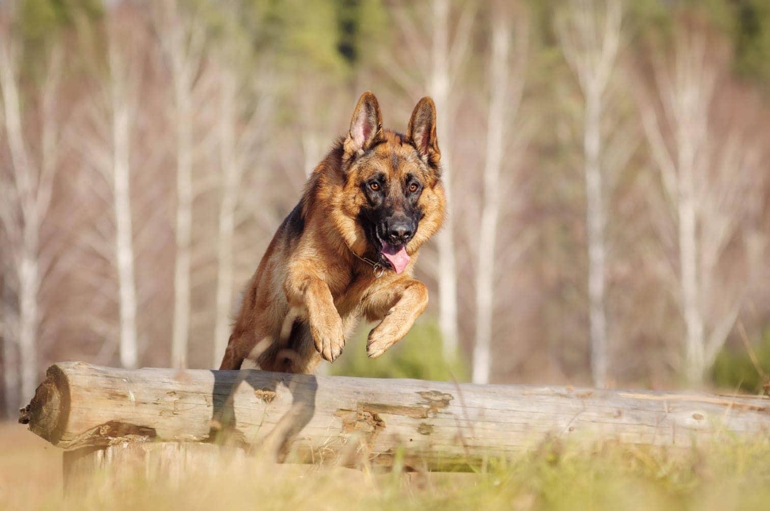 Foto: Shutterstock / Runa Kazakova