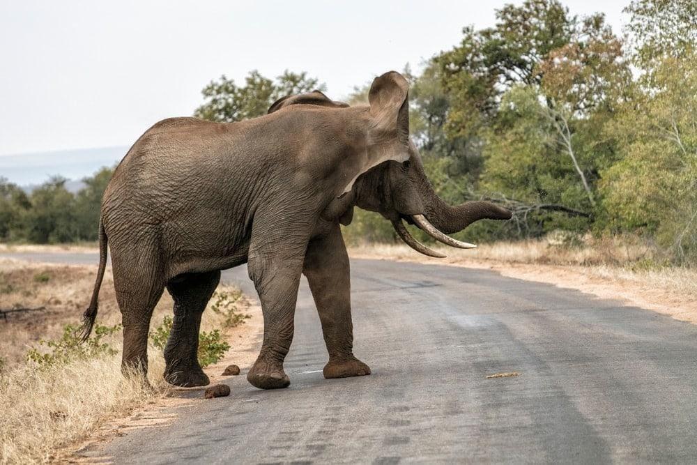 Elefant Ananas