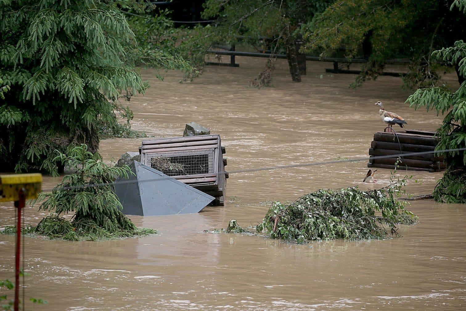 <p>Sehen Sie im Folgenden weitere Bilder aus dem Zoo und von der Überschwemmung.</p> Foto: dpa