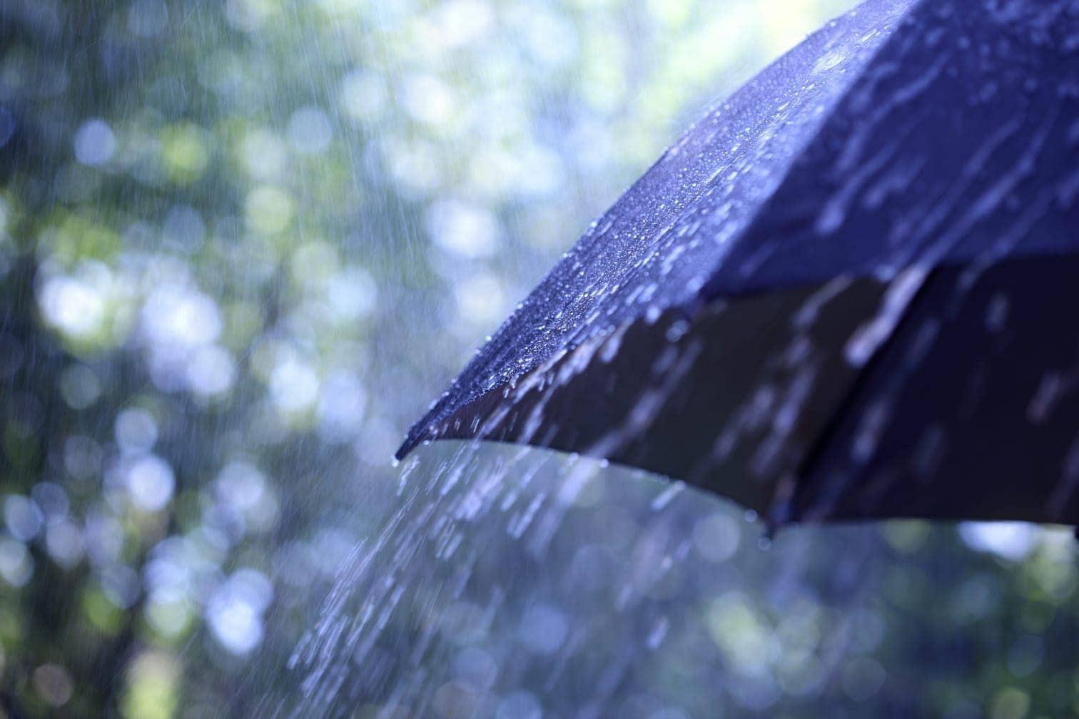 Foto: Brian A Jackson/shutterstock.com