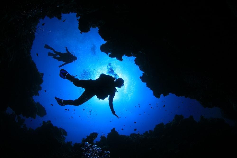 Foto: Rich Carey/Shutterstock.com
