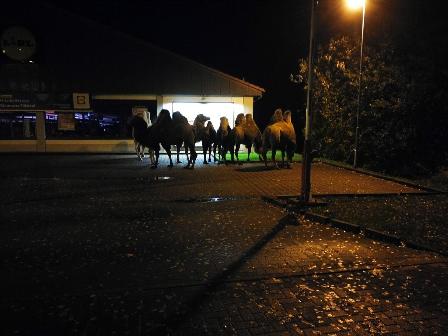 Foto: Polizeiinspektion Celle