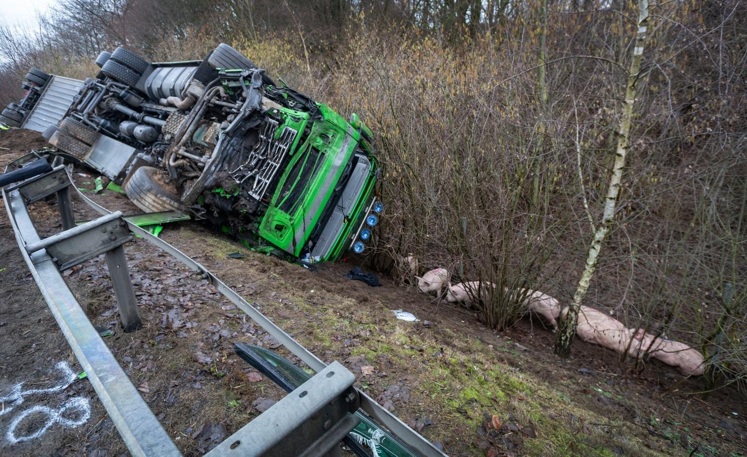 <p>Der Schweinetransporter war aus zunächst unbekannten Gründen von seiner Fahrspur abgekommen und in den Gegenverkehr geraten.</p> Foto: dpa/Arnulf Stoffel
