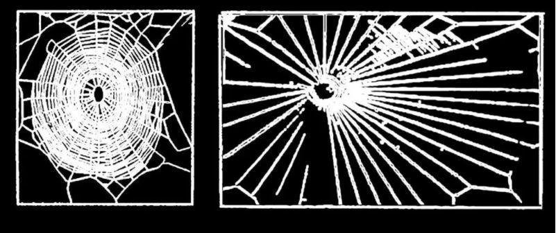 <p>Die Spinne unter Einfluss von Marihuana: Der Anfang ist gut