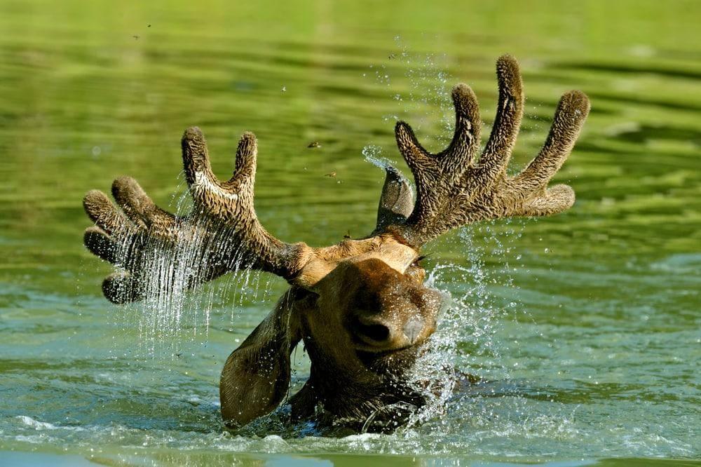 Foto: kyslynskahal / Shutterstock.com (Symbolbild)