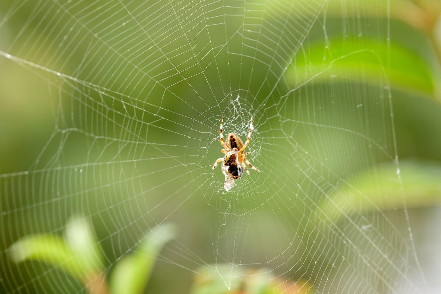 <p>Wie wirkt sich die Einnahme von Drogen auf eine Spinne beim Netzbau aus? Eine spannende Frage