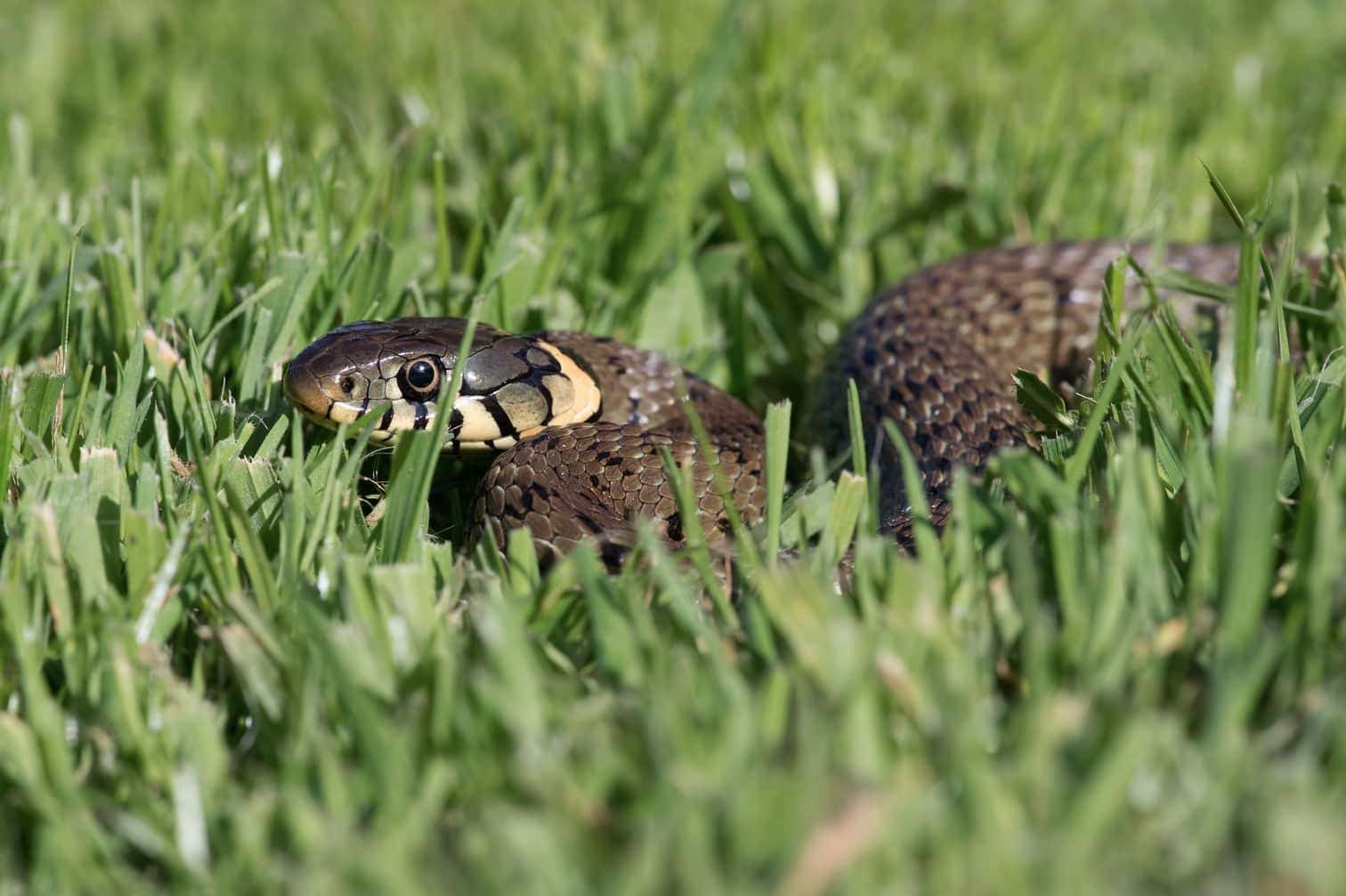 Foto: avemhuntphotography / shutterstock.com (Symbolfoto)