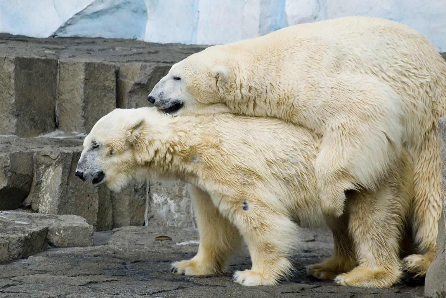Foto: Ilya D. Gridnev / shutterstock.com