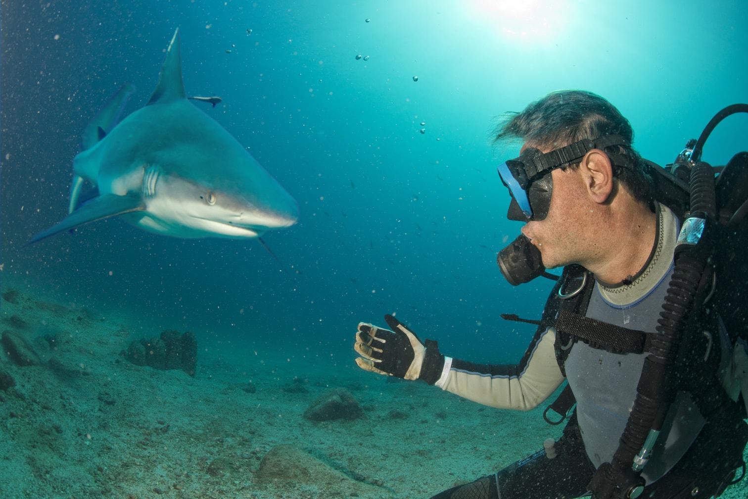 Foto: Shutterstock/Andrea Izzotti