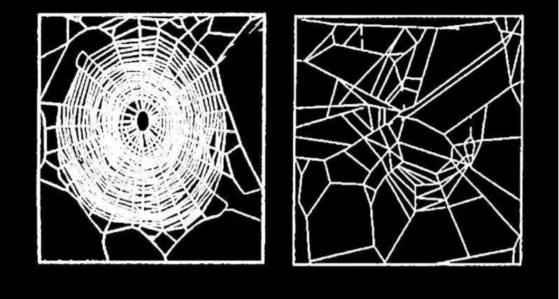 <p>Dieses Netz entsteht nach der Einnahme von LSD. Die Grundstruktur steht