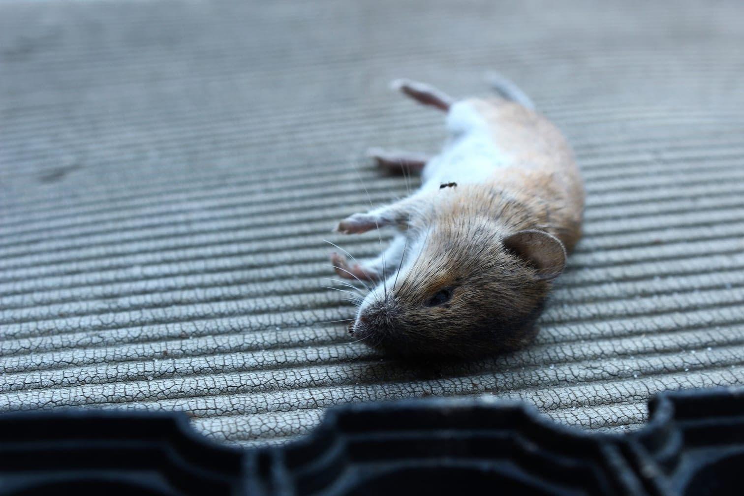 München: Tote Maus löst Feuerwehr-Großeinsatz aus