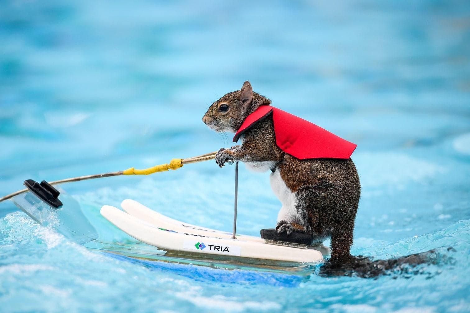 sie setzt sich zur Ruhe. Auch die Eichhörnchen gehen in Rente.</p> Foto: dpa