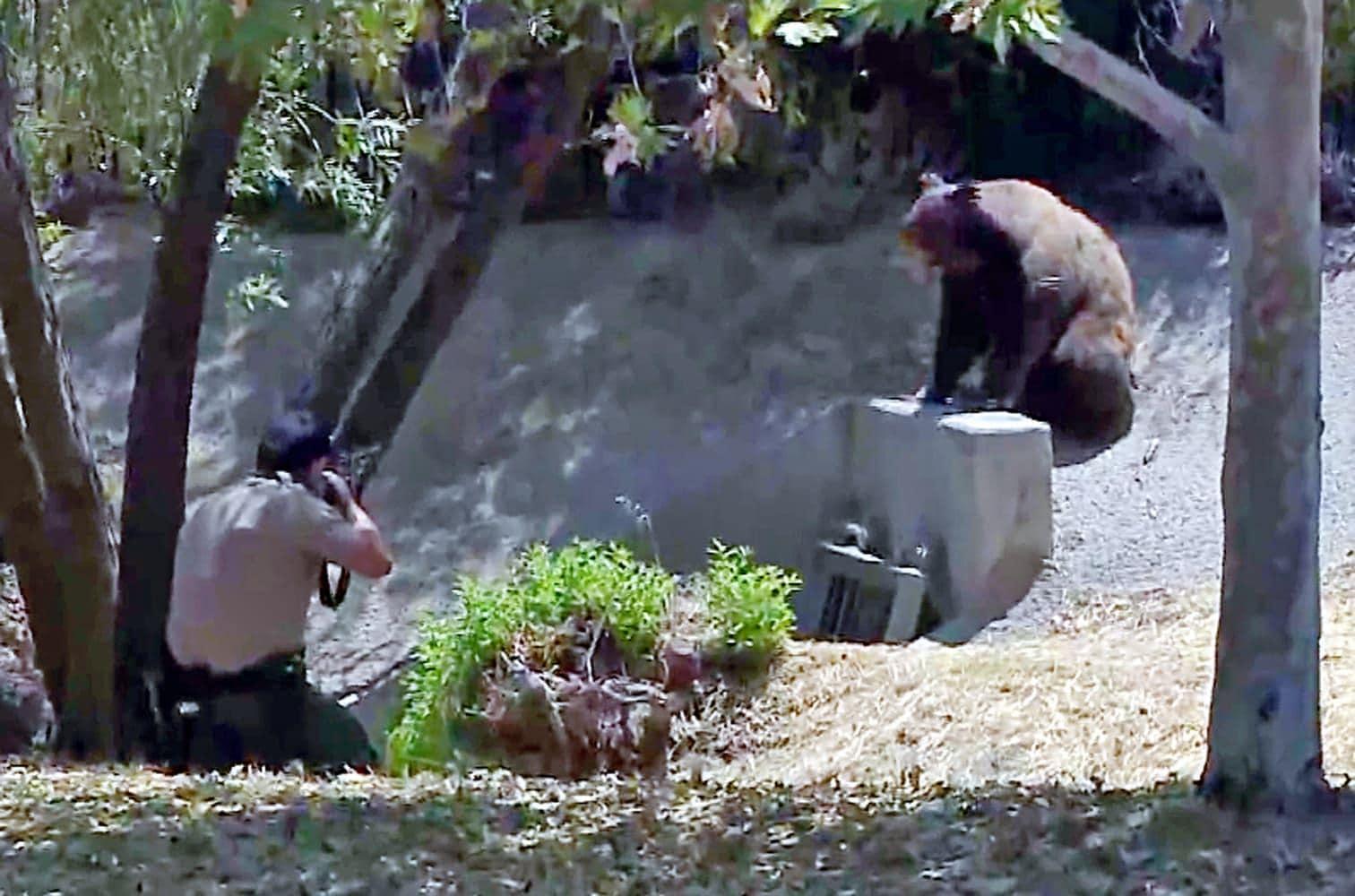 wie sie den in Los Angeles herumstreunenden Bären betäuben.</p> Foto: dpa