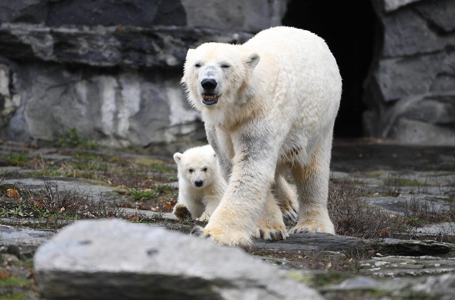 <p>Außerdem gingen Mutter und Baby zusammen schwimmen.</p> Foto: dpa/Britta Pedersen