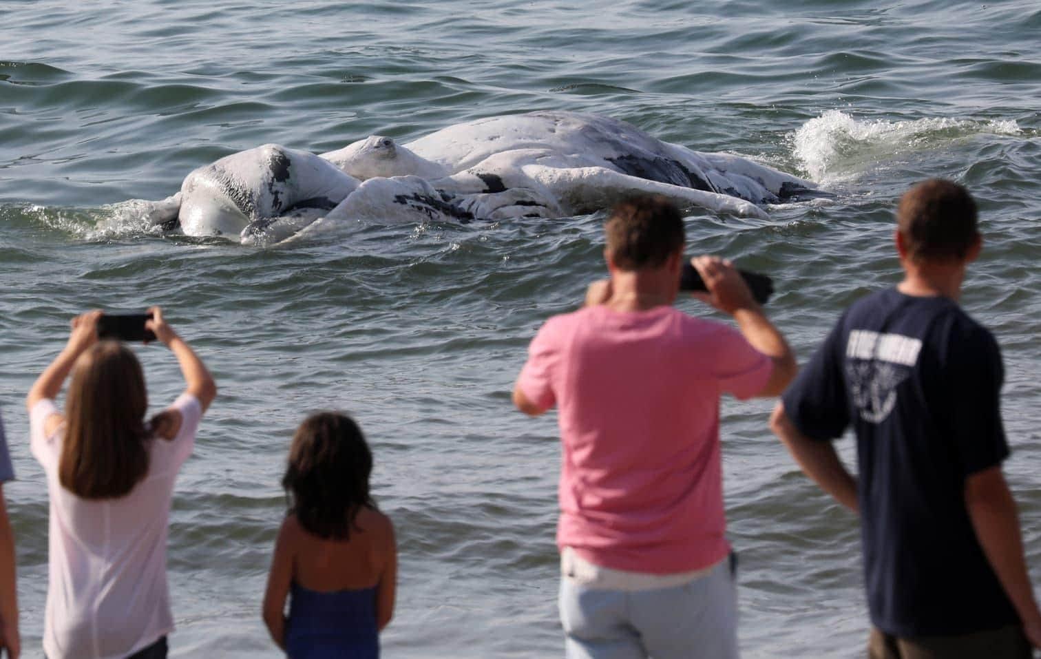 <p>Das Tier wurde am Samstagnachmittag im Wasser treibend vor Graal-Müritz gesichtet.</p> Foto: dpa