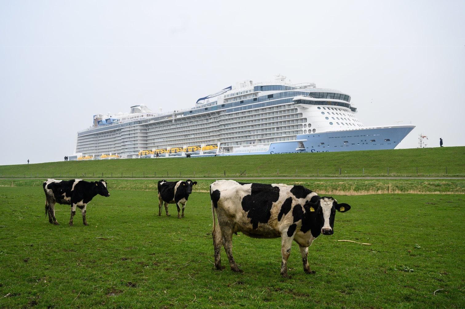 """<p>Dutzende Zuschauer begleiteten die Überführung der """"Spectrum of the Seas"""" vom Ufer aus.</p> Foto: dpa/Christophe Gateau"""